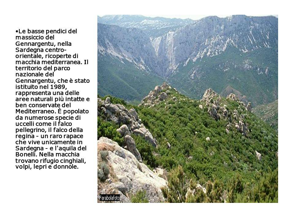 Le basse pendici del massiccio del Gennargentu, nella Sardegna centro- orientale, ricoperte di macchia mediterranea.