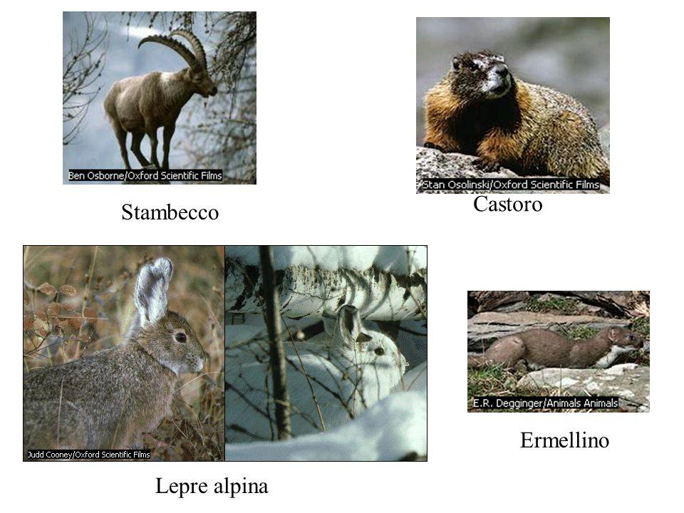 Castoro Stambecco Ermellino Lepre alpina
