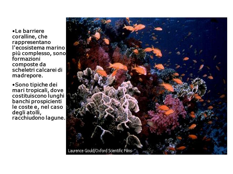 Le barriere coralline, che rappresentano l ecosistema marino più complesso, sono formazioni composte da scheletri calcarei di madrepore.