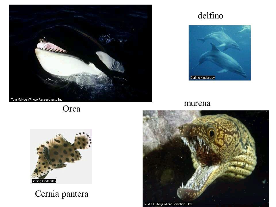 delfino murena Orca Cernia pantera