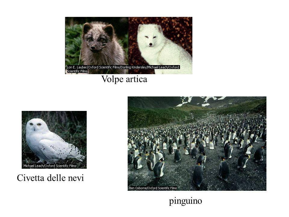Volpe artica Civetta delle nevi pinguino