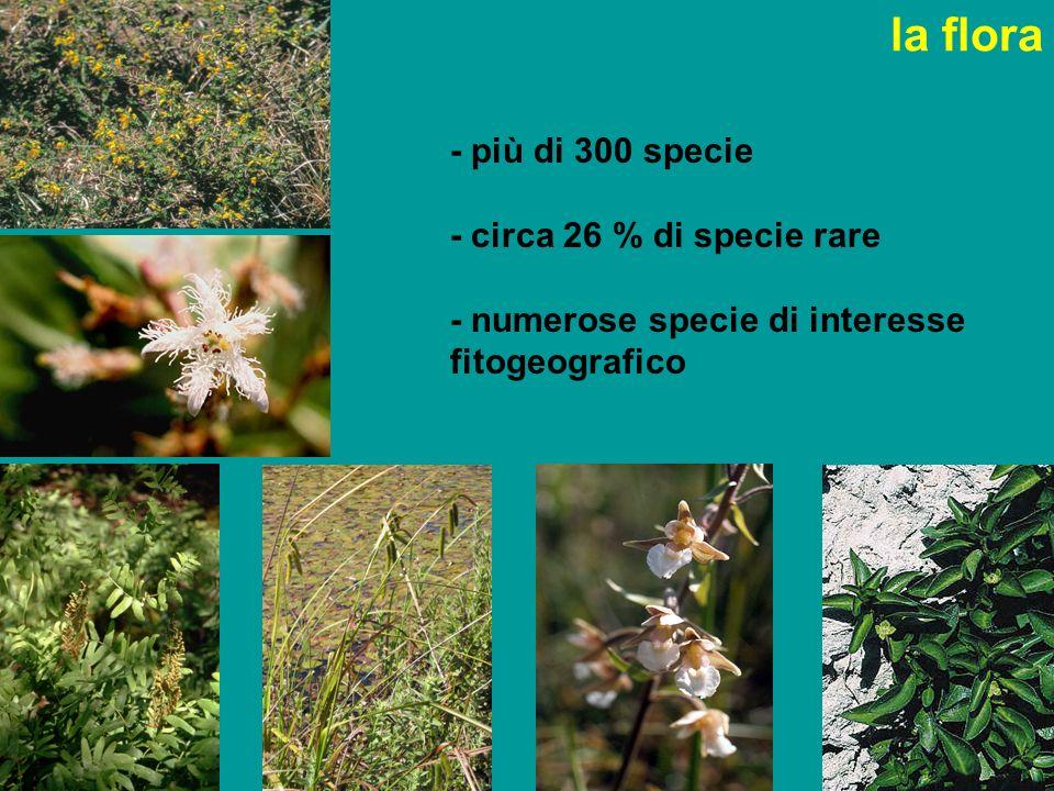 la flora - più di 300 specie - circa 26 % di specie rare