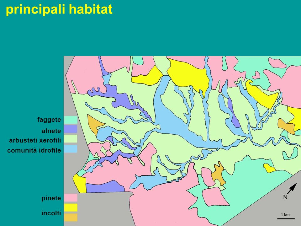 principali habitat faggete alnete arbusteti xerofili comunità idrofile