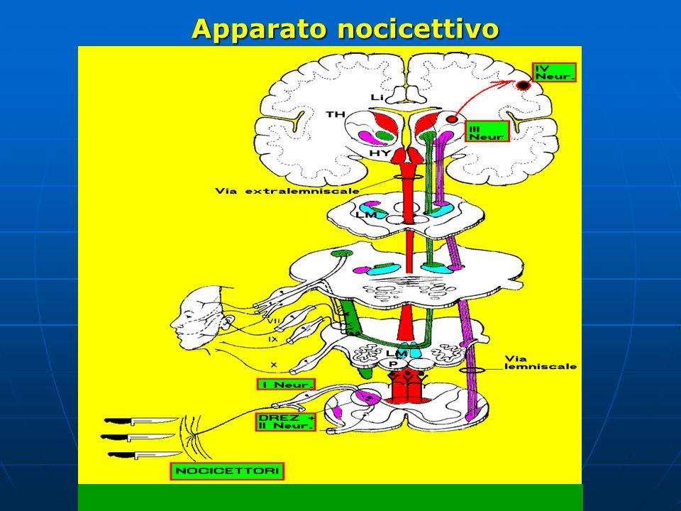 Apparato nocicettivo