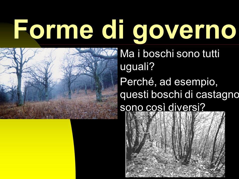 Forme di governo Ma i boschi sono tutti uguali
