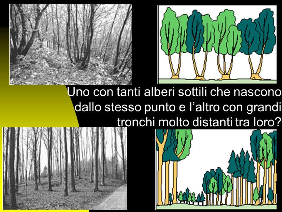 Uno con tanti alberi sottili che nascono dallo stesso punto e l'altro con grandi tronchi molto distanti tra loro