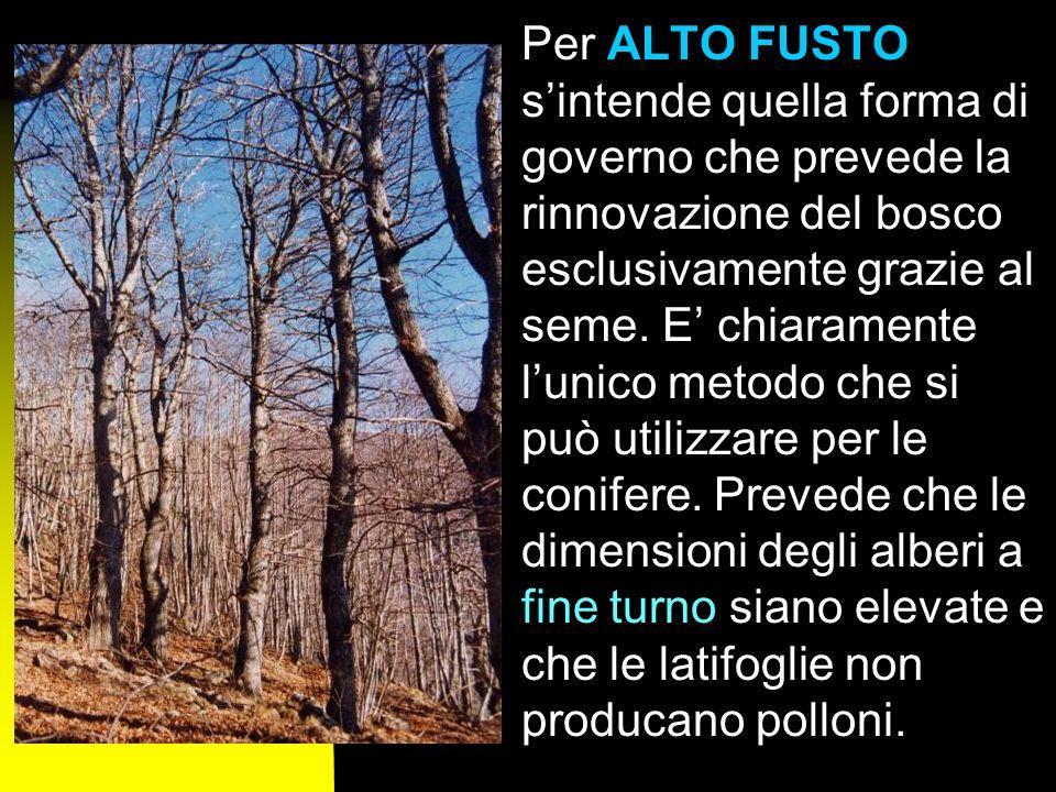 Per ALTO FUSTO s'intende quella forma di governo che prevede la rinnovazione del bosco esclusivamente grazie al seme.