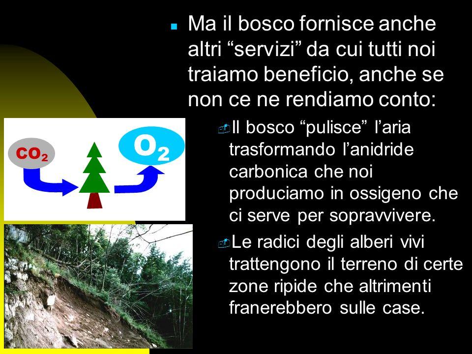 Ma il bosco fornisce anche altri servizi da cui tutti noi traiamo beneficio, anche se non ce ne rendiamo conto: