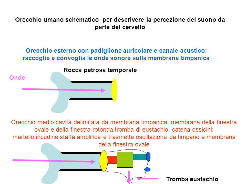 Orecchio umano schematico per descrivere la percezione del suono da parte del cervello