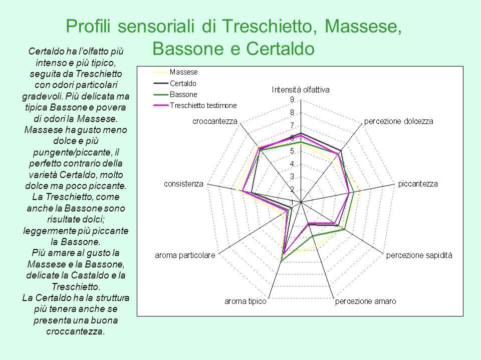Profili sensoriali di Treschietto, Massese, Bassone e Certaldo