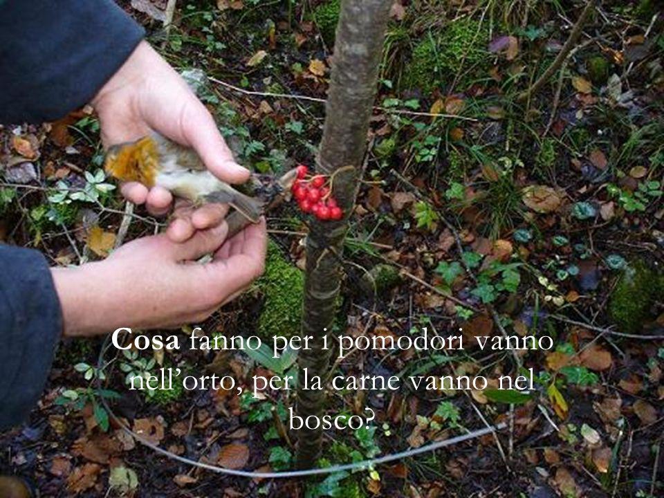 Cosa fanno per i pomodori vanno nell'orto, per la carne vanno nel bosco