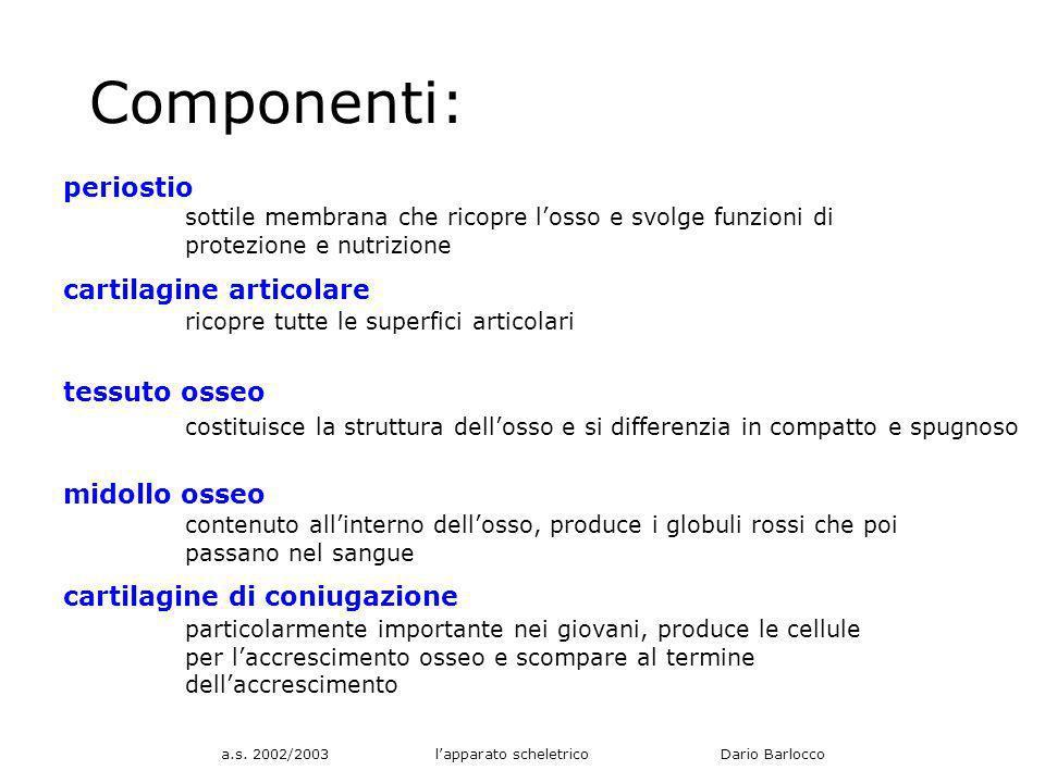 a.s. 2002/2003 l'apparato scheletrico Dario Barlocco