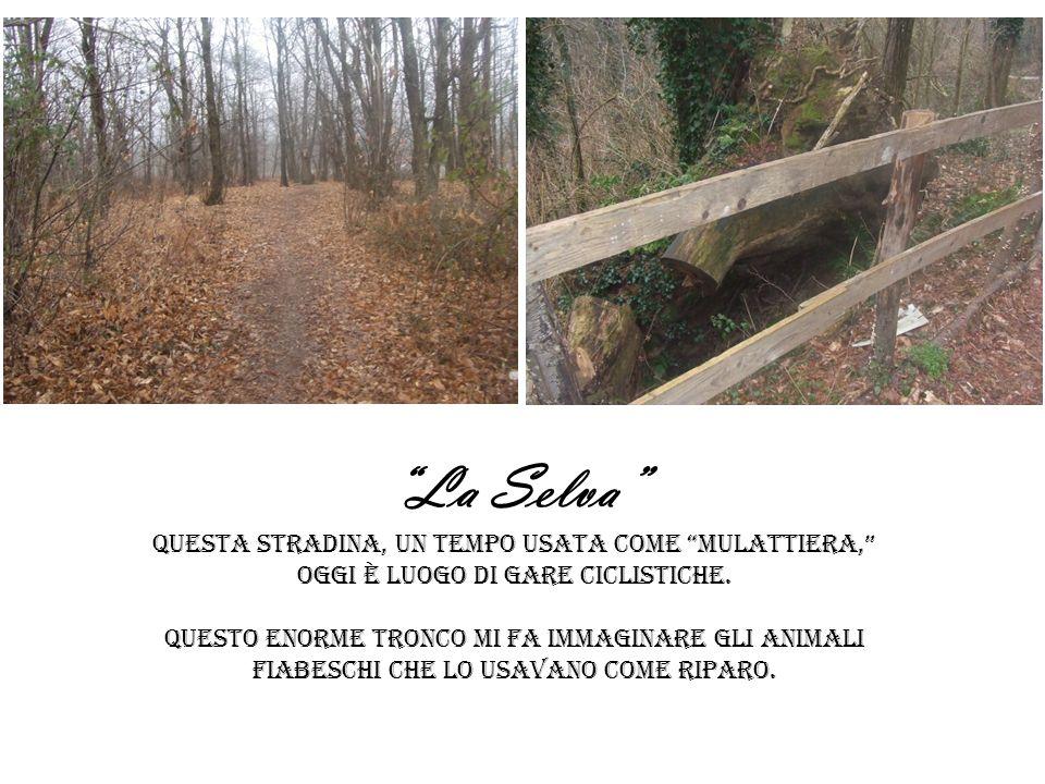 La Selva Questa stradina, un tempo usata come mulattiera, oggi è luogo di gare ciclistiche.