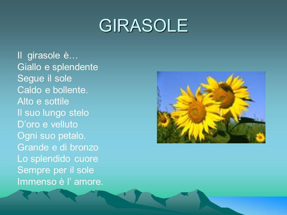 GIRASOLE Il girasole è… Giallo e splendente Segue il sole
