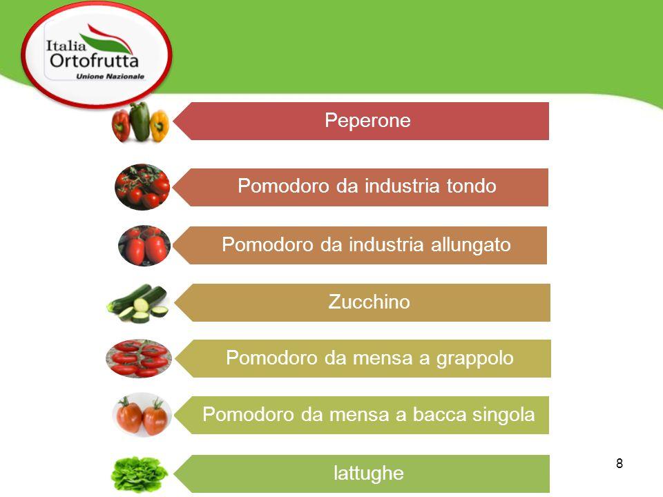 Pomodoro da industria tondo Pomodoro da industria allungato Zucchino