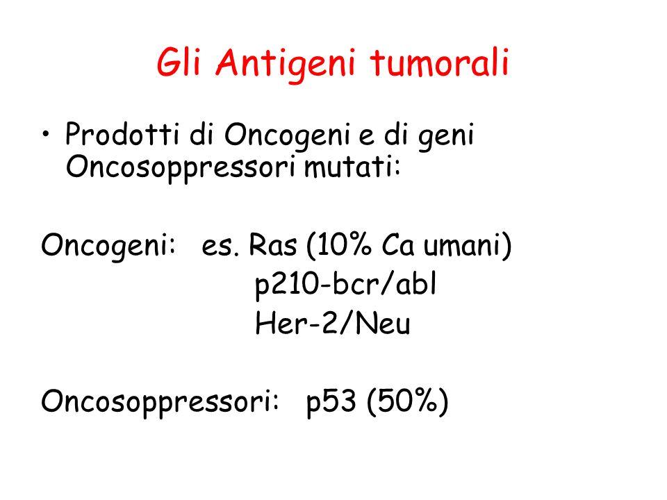 Gli Antigeni tumorali Prodotti di Oncogeni e di geni Oncosoppressori mutati: Oncogeni: es. Ras (10% Ca umani)