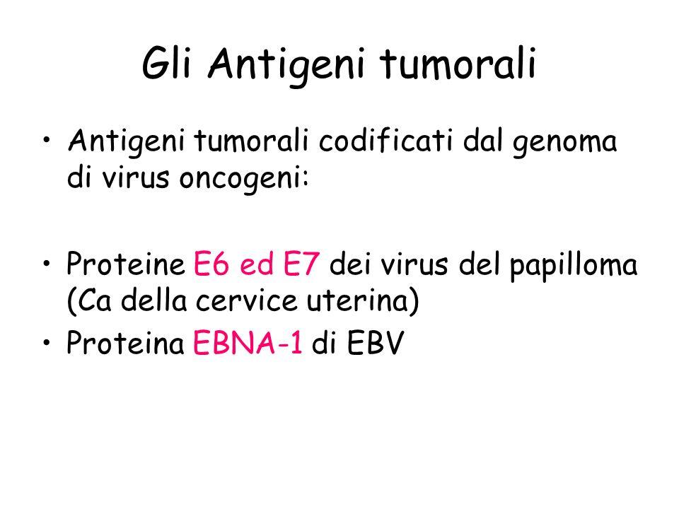 Gli Antigeni tumorali Antigeni tumorali codificati dal genoma di virus oncogeni: