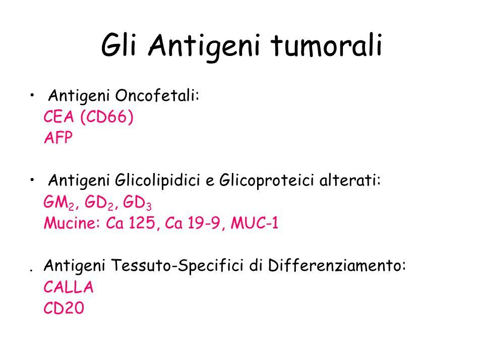 Gli Antigeni tumorali Antigeni Oncofetali: CEA (CD66) AFP