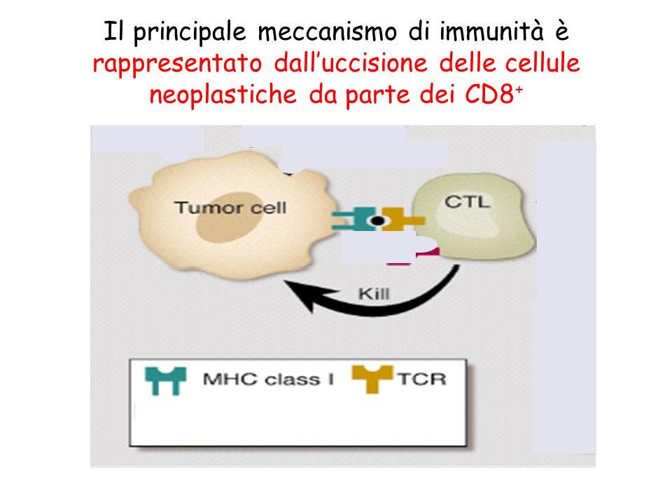 Il principale meccanismo di immunità è rappresentato dall'uccisione delle cellule neoplastiche da parte dei CD8+
