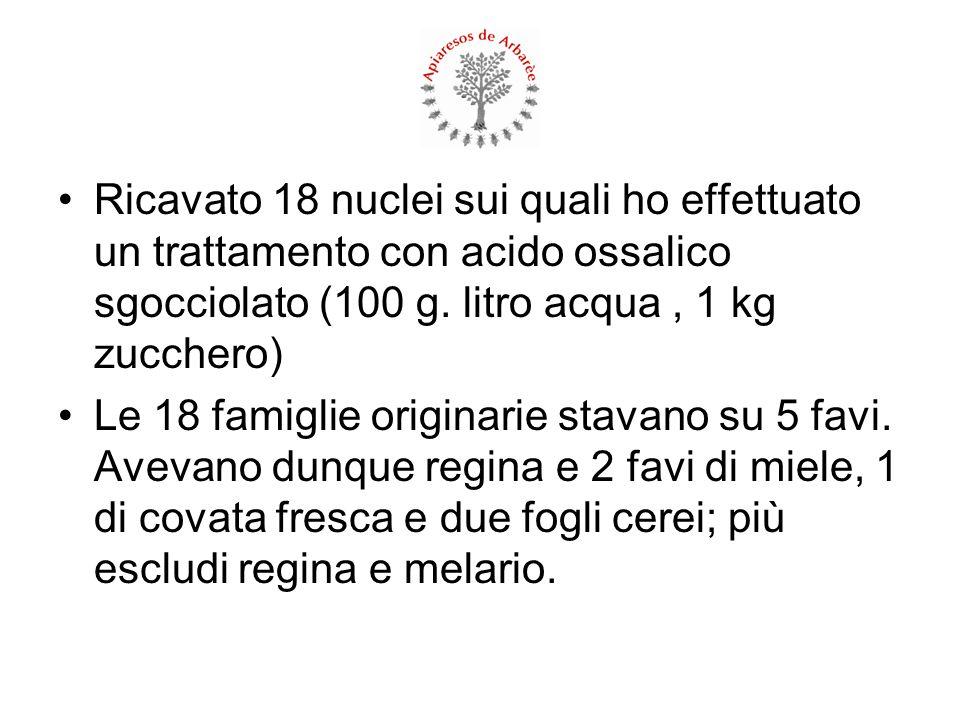 Ricavato 18 nuclei sui quali ho effettuato un trattamento con acido ossalico sgocciolato (100 g. litro acqua , 1 kg zucchero)