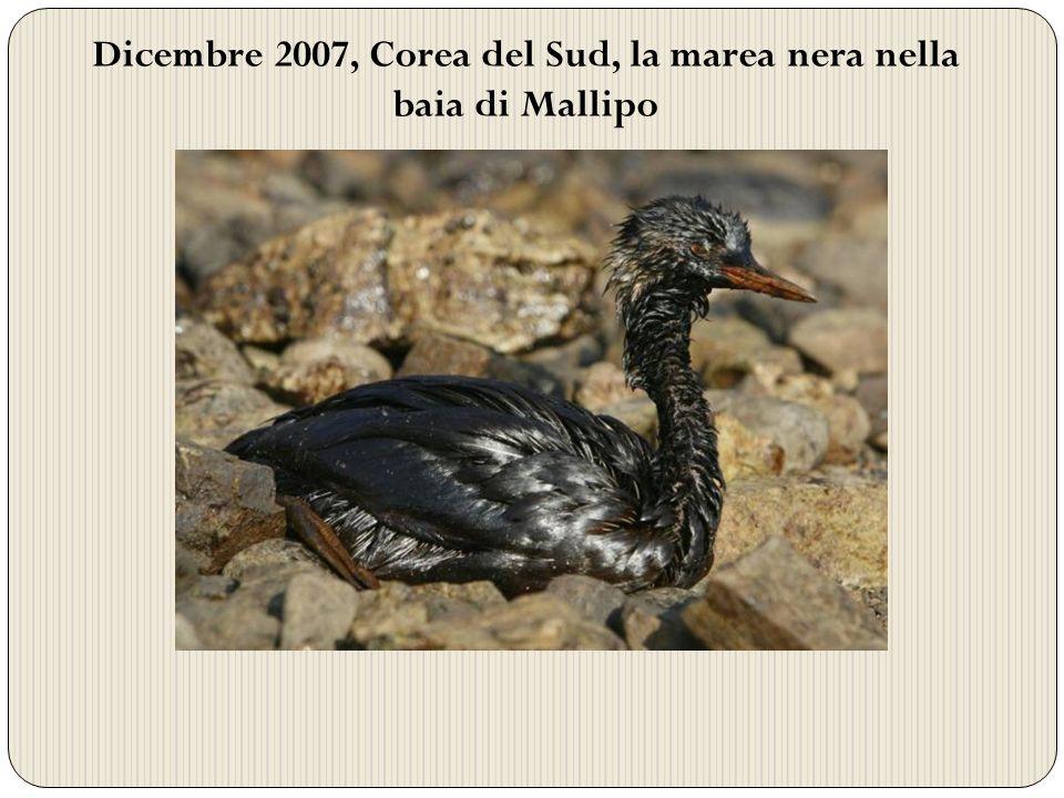 Dicembre 2007, Corea del Sud, la marea nera nella baia di Mallipo