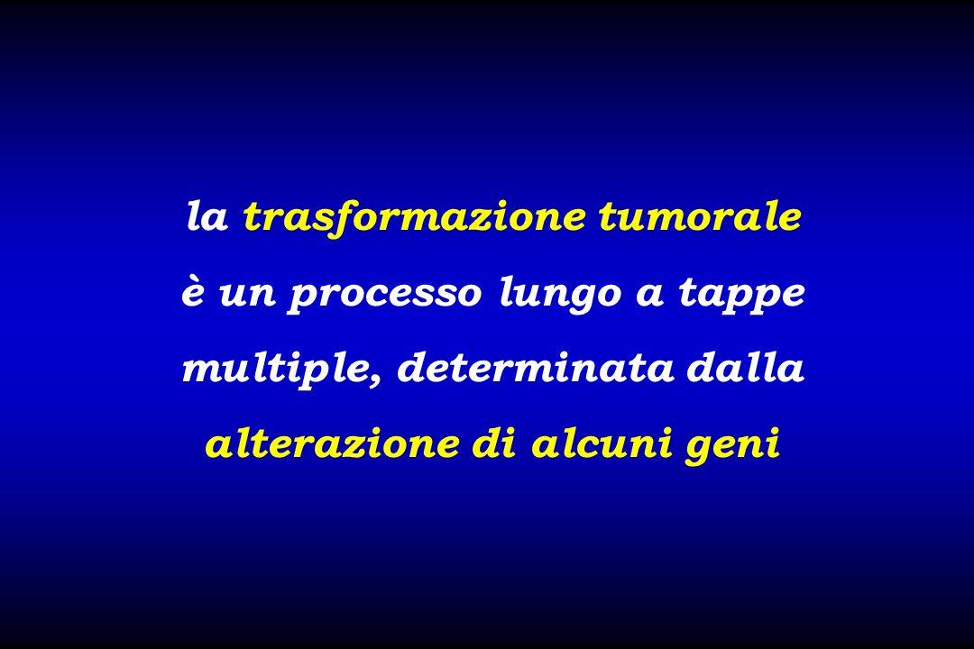 la trasformazione tumorale è un processo lungo a tappe multiple, determinata dalla alterazione di alcuni geni