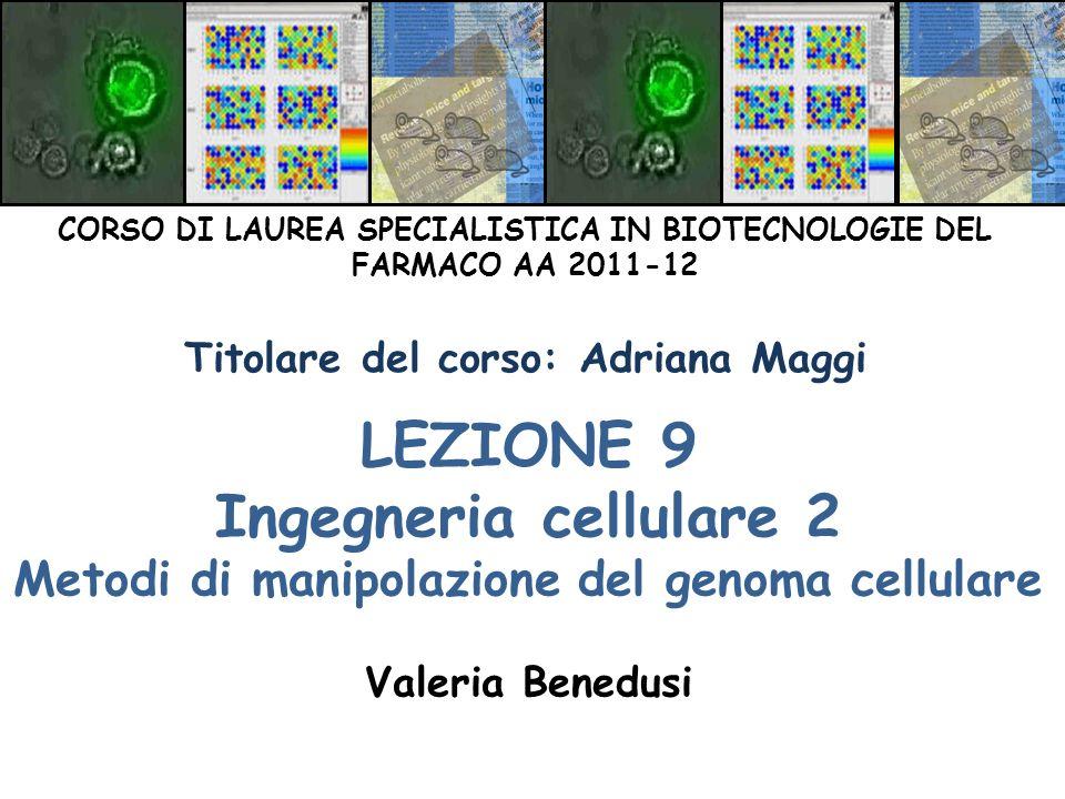 LEZIONE 9 Ingegneria cellulare 2