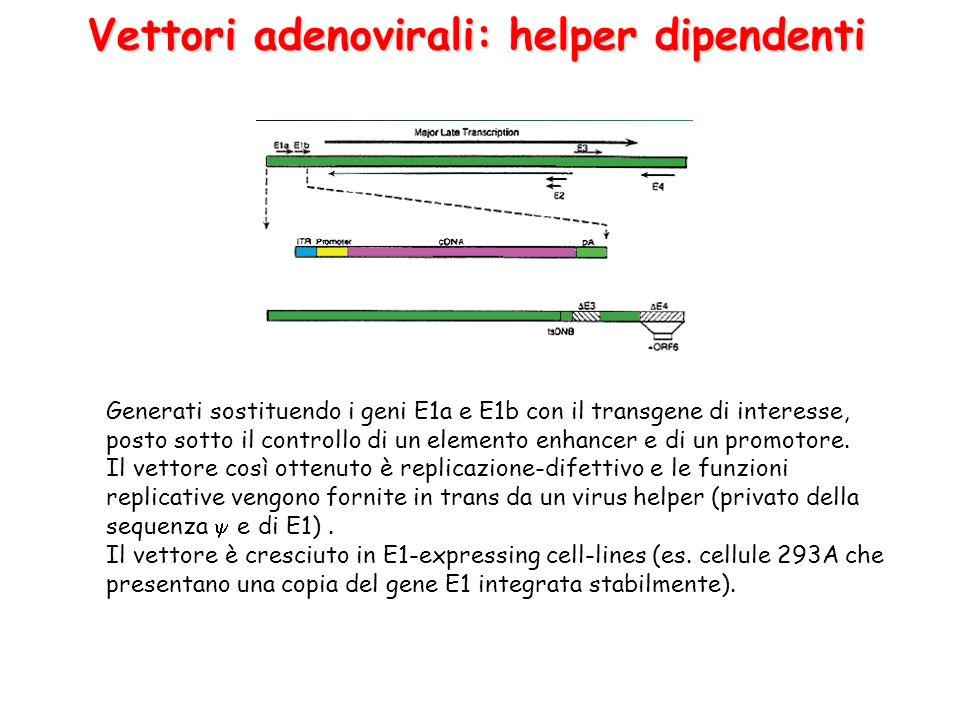 Vettori adenovirali: helper dipendenti