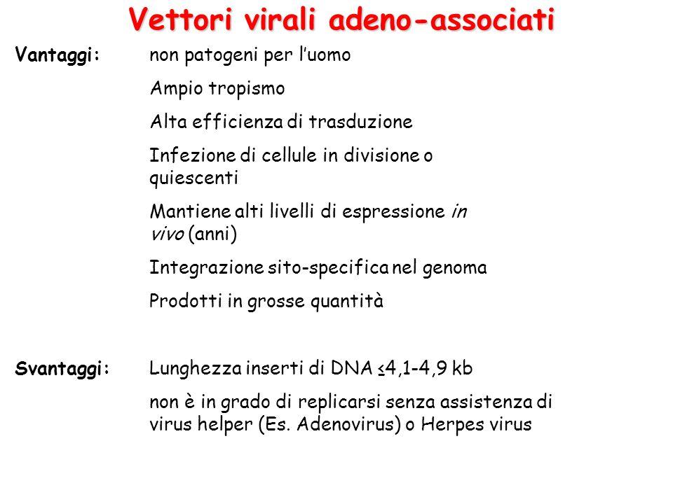 Vettori virali adeno-associati