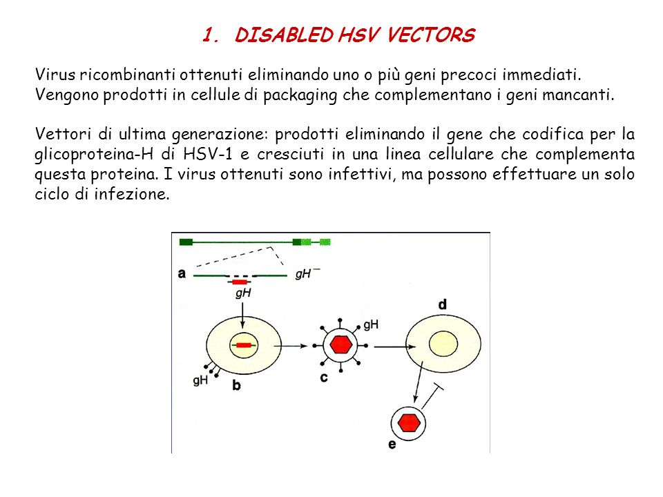 DISABLED HSV VECTORS Virus ricombinanti ottenuti eliminando uno o più geni precoci immediati.