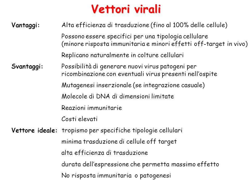 Vettori virali Vantaggi: Alta efficienza di trasduzione (fino al 100% delle cellule)