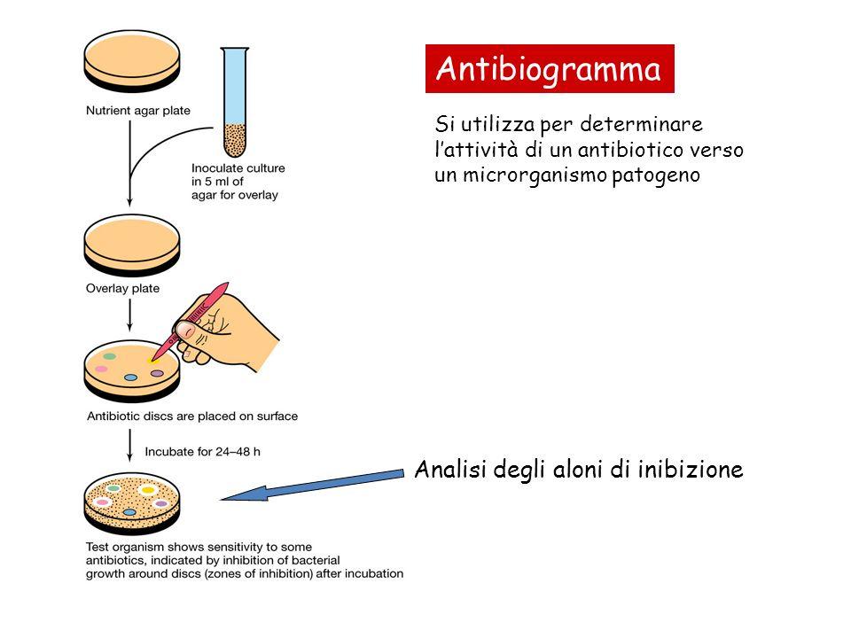 Antibiogramma Analisi degli aloni di inibizione