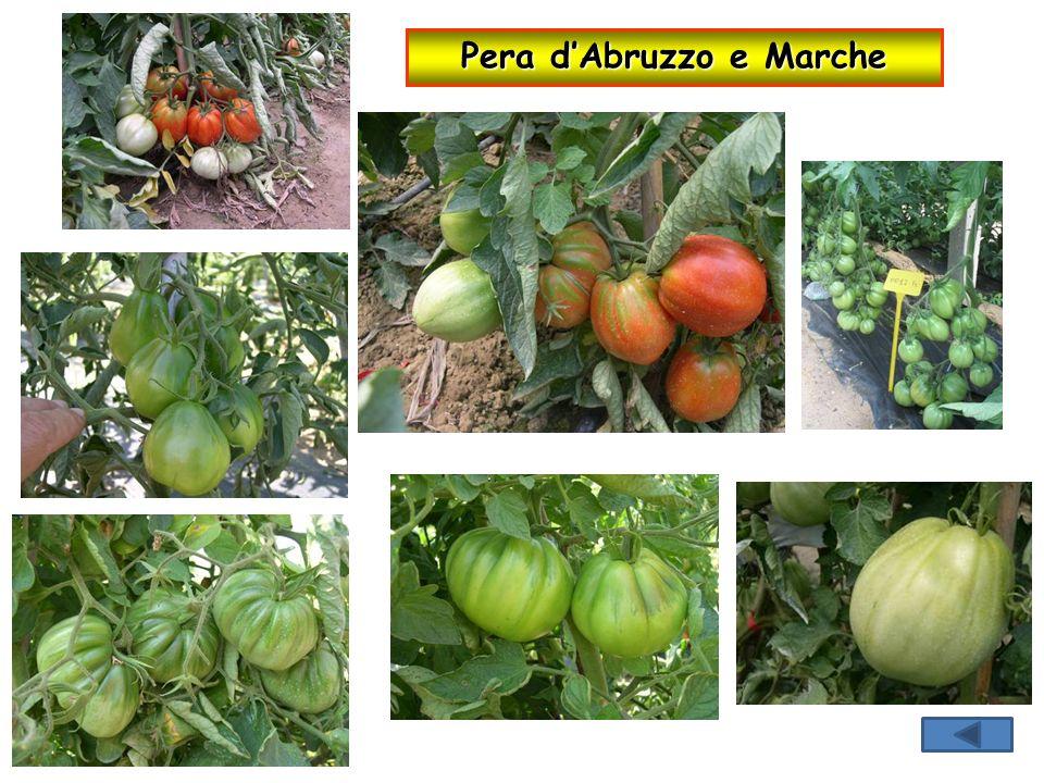 Pera d'Abruzzo e Marche