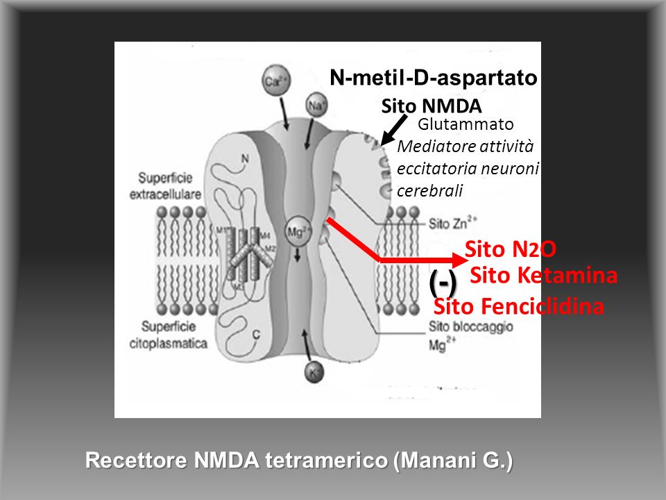 (-) Sito N2O Sito Ketamina Sito Fenciclidina N-metil-D-aspartato