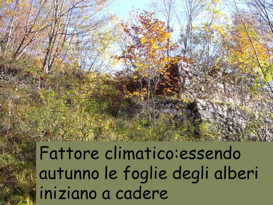 Fattore climatico:essendo autunno le foglie degli alberi iniziano a cadere
