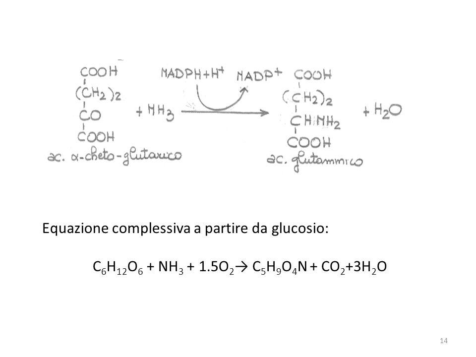 Equazione complessiva a partire da glucosio: