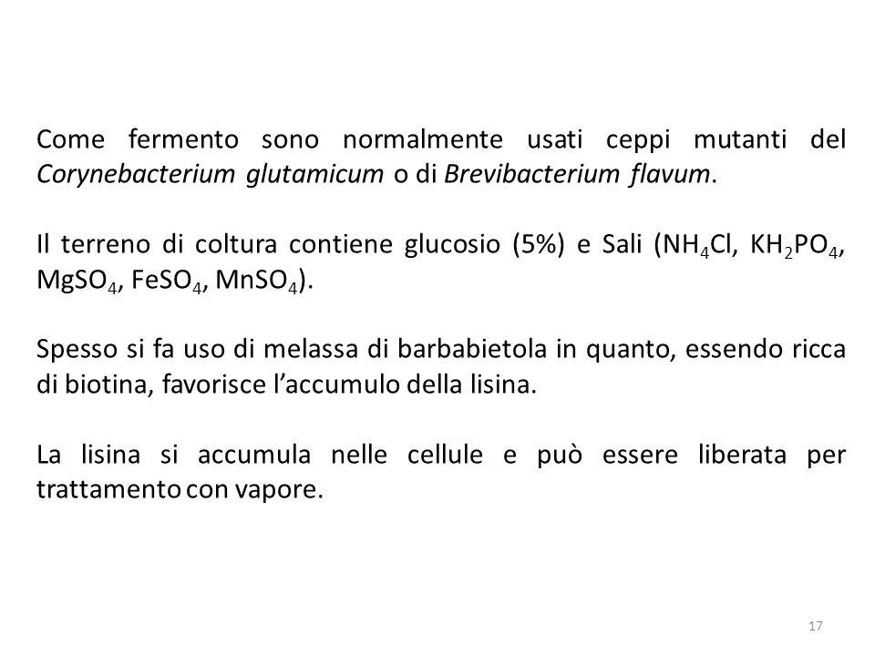 Come fermento sono normalmente usati ceppi mutanti del Corynebacterium glutamicum o di Brevibacterium flavum.
