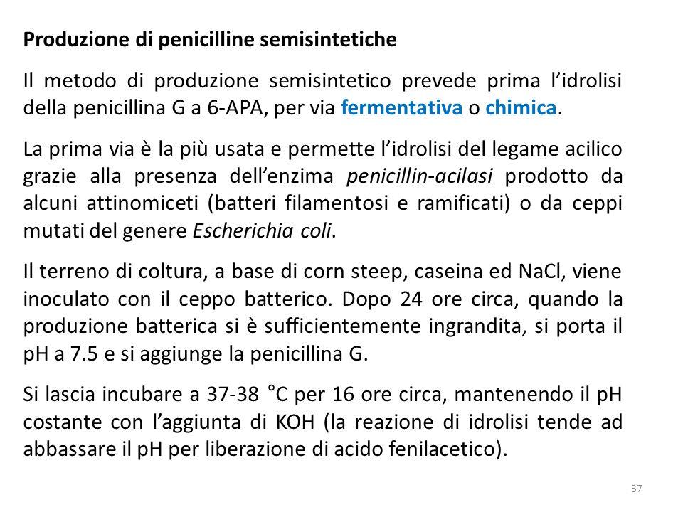 Produzione di penicilline semisintetiche