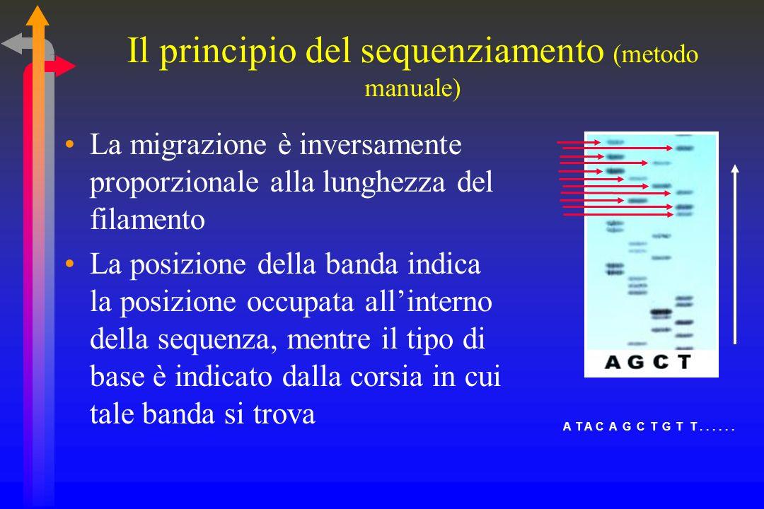 Il principio del sequenziamento (metodo manuale)