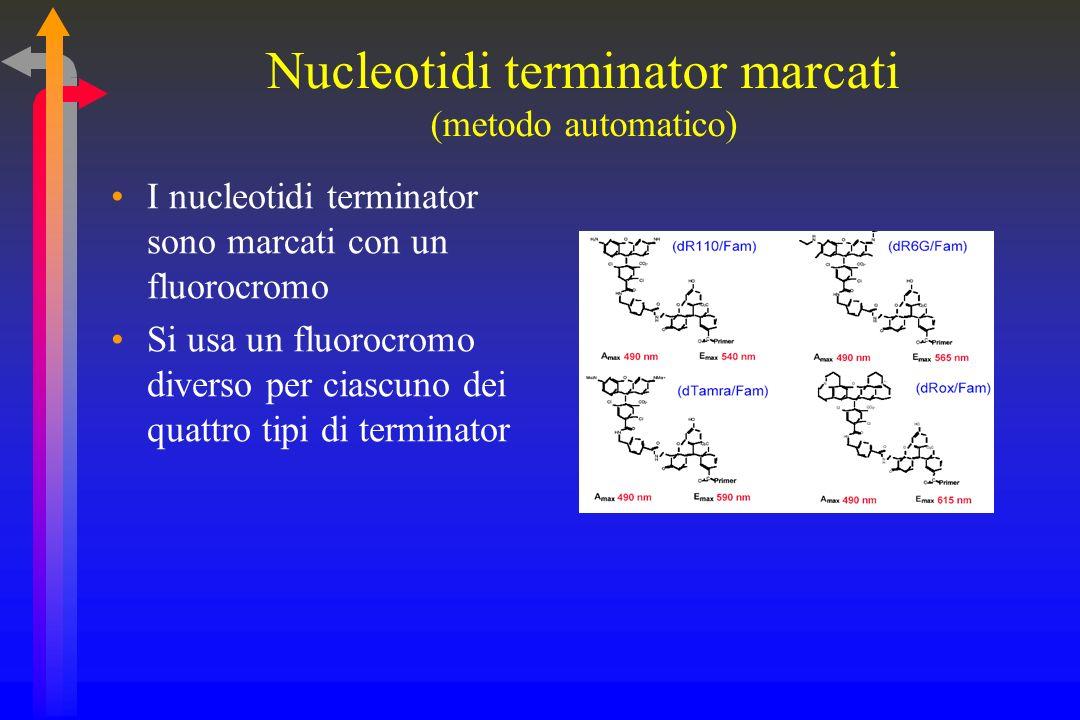 Nucleotidi terminator marcati (metodo automatico)
