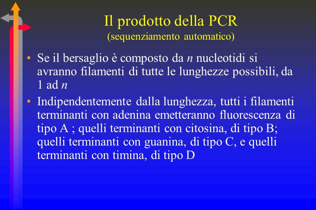 Il prodotto della PCR (sequenziamento automatico)