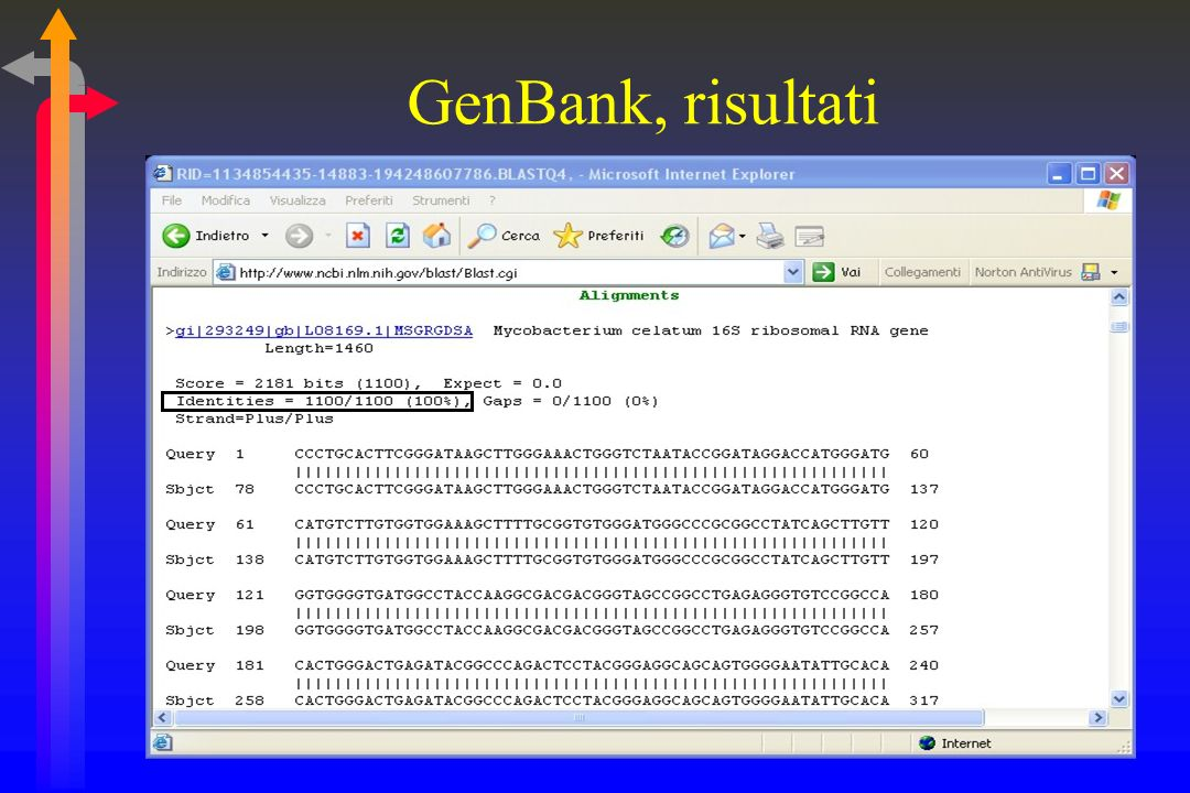 GenBank, risultati