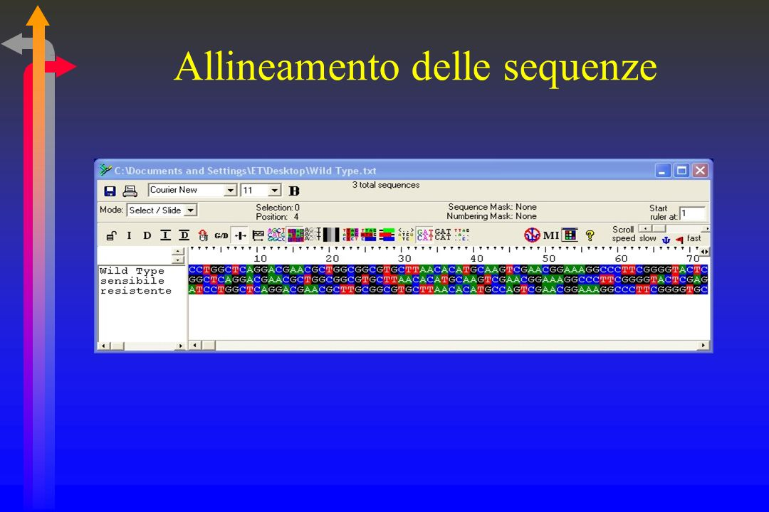 Allineamento delle sequenze