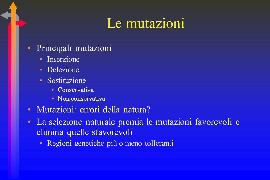 Le mutazioni Principali mutazioni Mutazioni: errori della natura