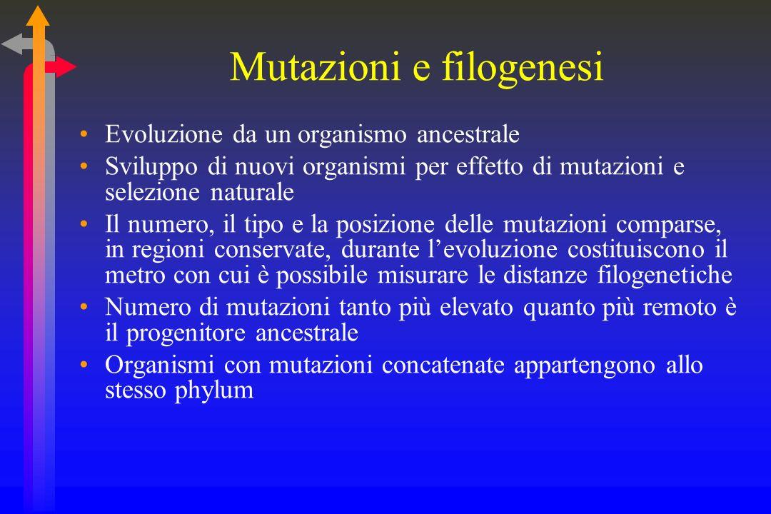 Mutazioni e filogenesi