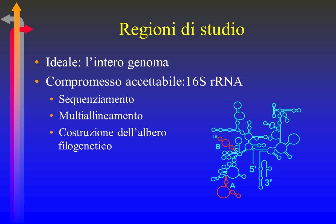 Regioni di studio Ideale: l'intero genoma
