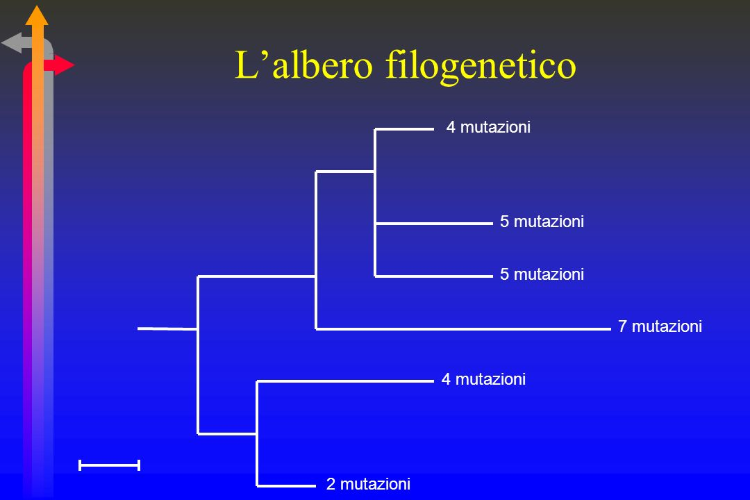 L'albero filogenetico