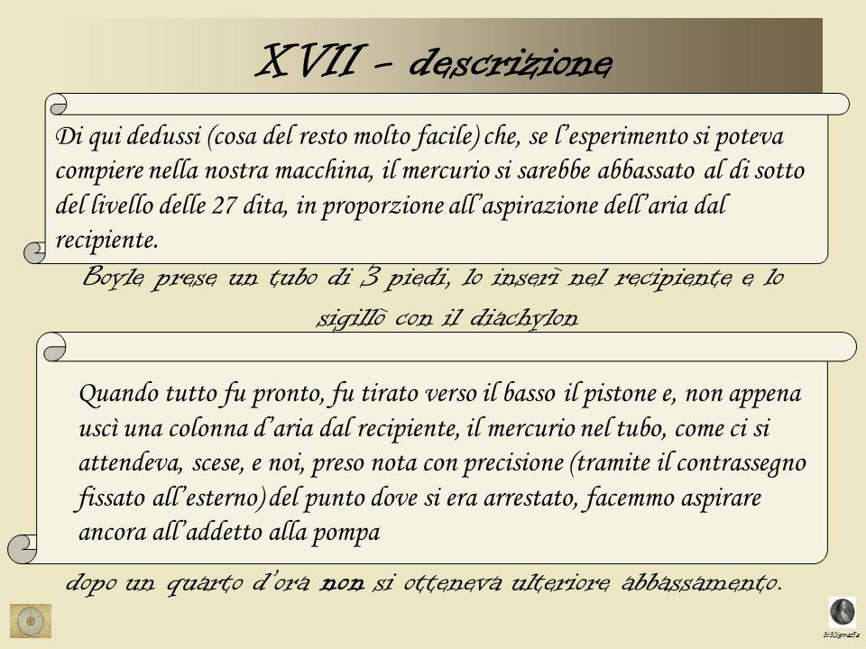XVII - descrizione