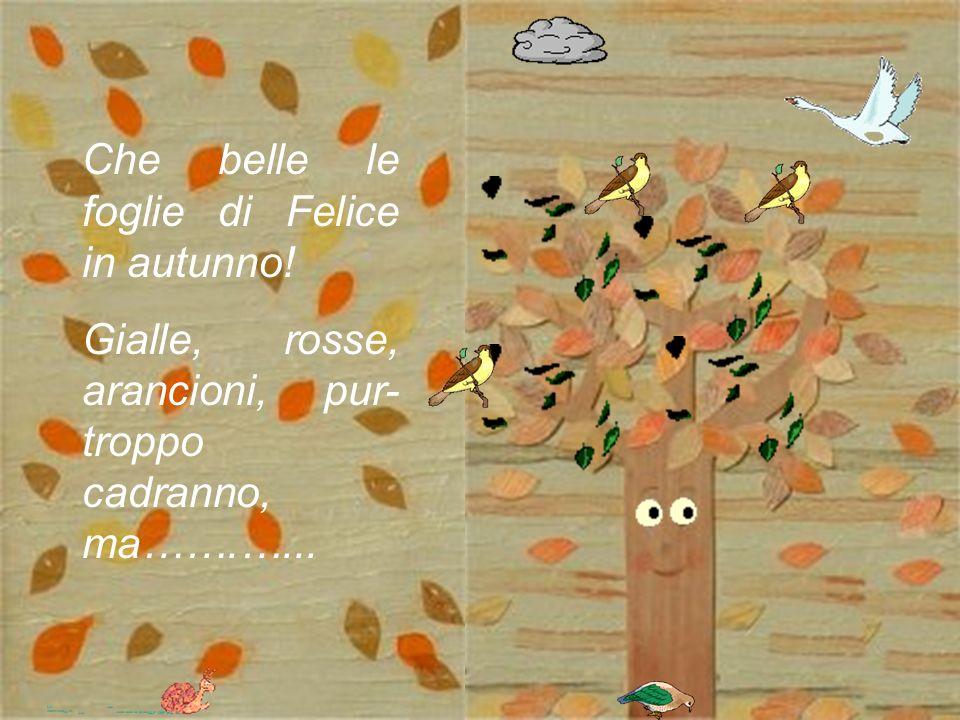 Che belle le foglie di Felice in autunno!