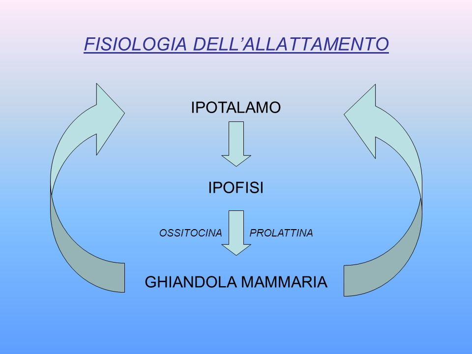 FISIOLOGIA DELL'ALLATTAMENTO